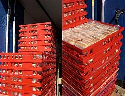 Dėžės duonos gaminių transportavimui ir laikymui